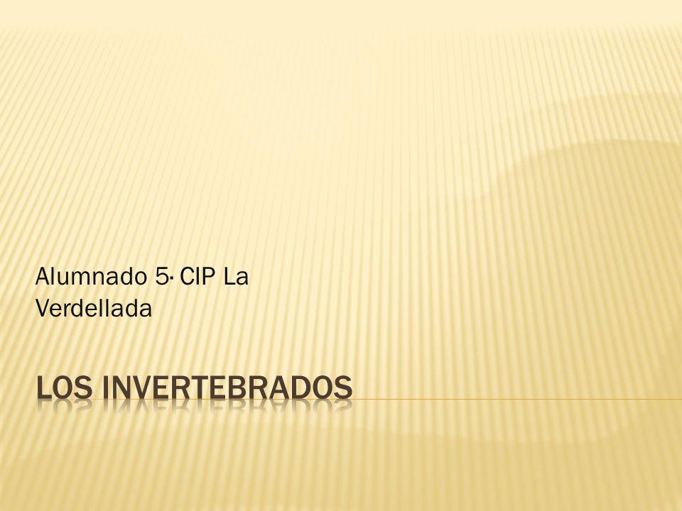 Alumnado 5· CIP La Verdellada