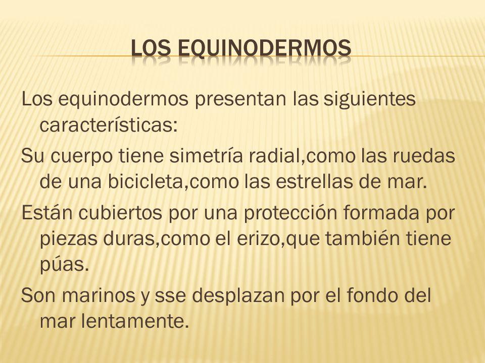Los equinodermos presentan las siguientes características: Su cuerpo tiene simetría radial,como las ruedas de una bicicleta,como las estrellas de mar.