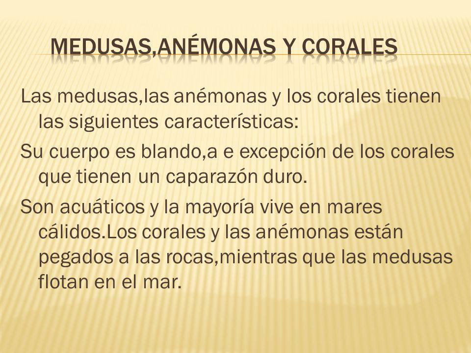 Las medusas,las anémonas y los corales tienen las siguientes características: Su cuerpo es blando,a e excepción de los corales que tienen un caparazón