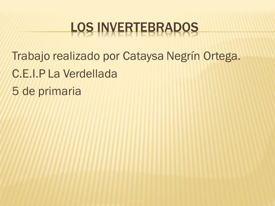 Trabajo realizado por Cataysa Negrín Ortega. C.E.I.P La Verdellada 5 de primaria