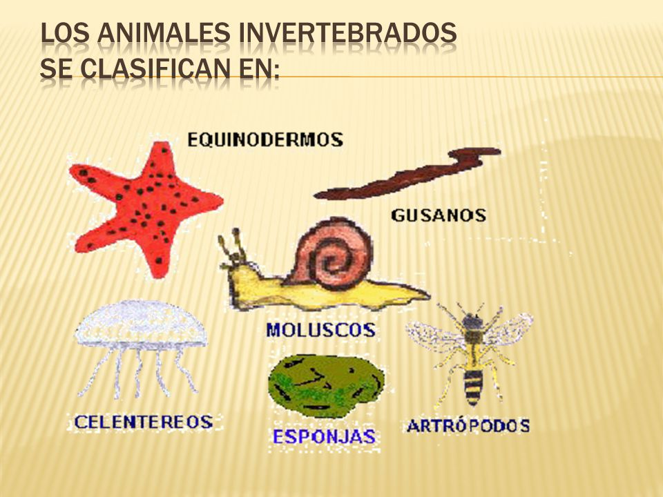 Las medusas,las anémonas y los corales tienen las siguientes características: Su cuerpo es blando,a e excepción de los corales que tienen un caparazón duro.