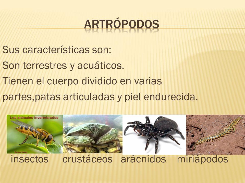 Sus características son: Son terrestres y acuáticos. Tienen el cuerpo dividido en varias partes,patas articuladas y piel endurecida. insectos crustáce