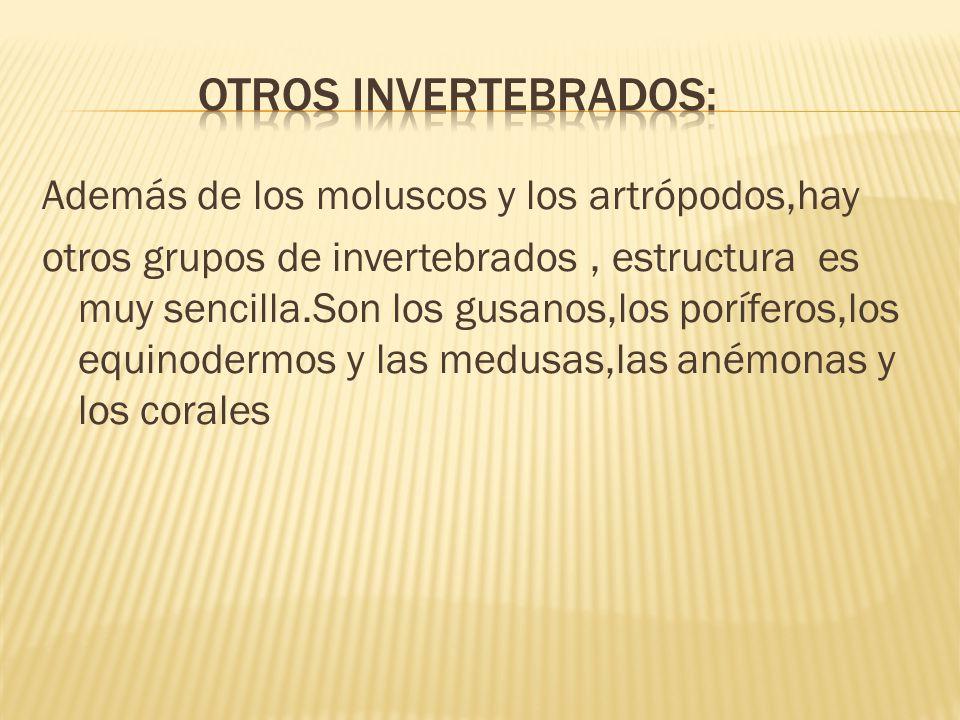Además de los moluscos y los artrópodos,hay otros grupos de invertebrados, estructura es muy sencilla.Son los gusanos,los poríferos,los equinodermos y