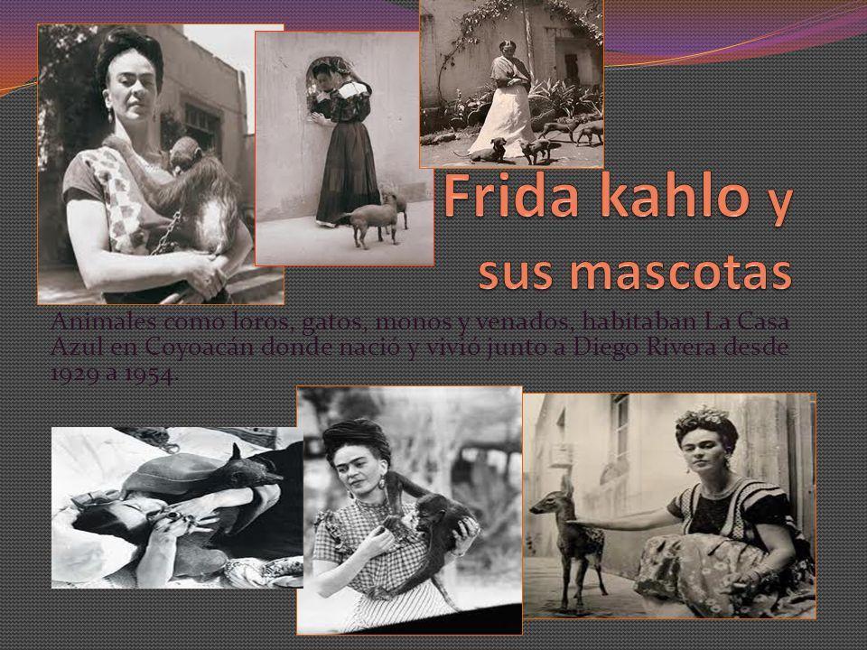 A Frida le encantaban los animales, los más, sin duda, fueron los Changos, estos animales tuvieron mucha importancia en su vida y en casi todas sus pinturas.