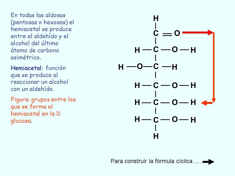 C C C C C C O O O O O O H H H H H H H H H H H H C C C C C C O O O O O H H-O H H H H H H H H H H Transformación de una fórmula lineal en una cíclica (D-glucosa)
