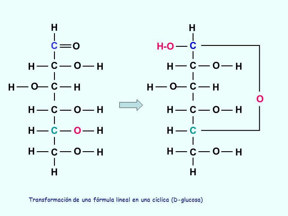 C C C C C C O O O O O O H H H H H H H H H H H H C C C C C C O O O O O H H-O H H H H H H H H H H Transformación de una fórmula lineal en una cíclica (D