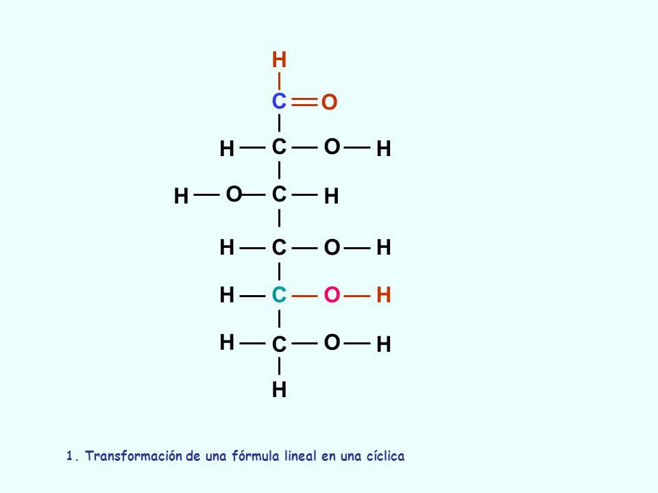 C C C C C C O O O O O H H H H OH H H H H H H H 1. Transformación de una fórmula lineal en una cíclica