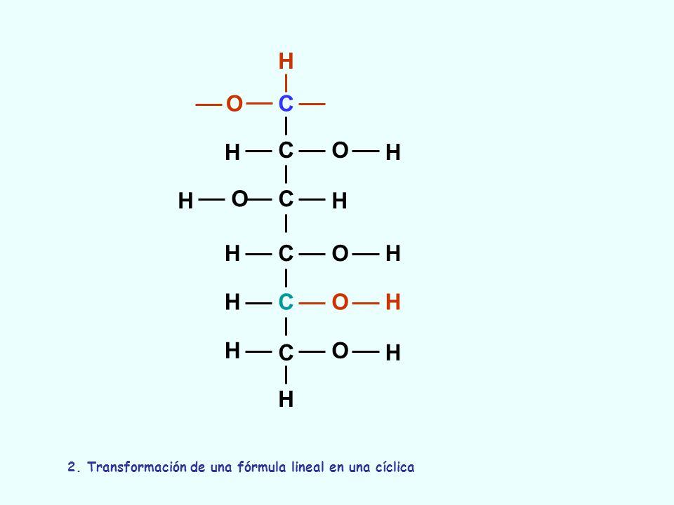 C C C C C C O O O O O H H H H OH H H H H H H H 2. Transformación de una fórmula lineal en una cíclica
