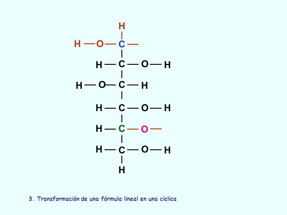 C C C C C C O O O O O H H H H OH H H H H H H H 3. Transformación de una fórmula lineal en una cíclica