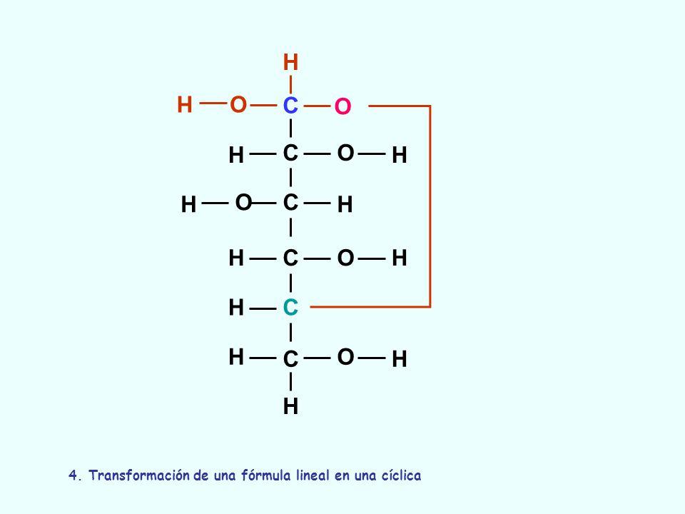 C C C C C C O O O O O H H H H OH H H H H H H H 4. Transformación de una fórmula lineal en una cíclica
