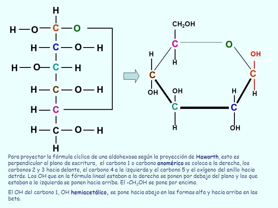C C C C C C O O O O O H H H H OH H H H H H H H O OH H H H CH 2 OH H OH C C C H C C Para proyectar la fórmula cíclica de una aldohexosa según la proyec