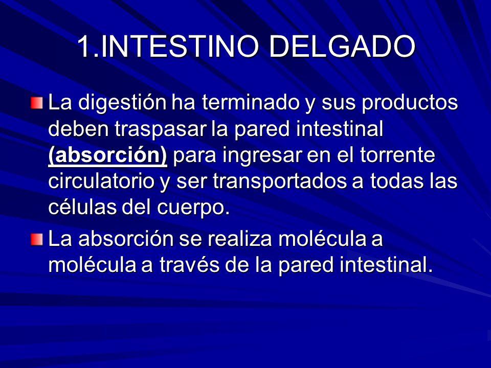 1.INTESTINO DELGADO La digestión ha terminado y sus productos deben traspasar la pared intestinal (absorción) para ingresar en el torrente circulatorio y ser transportados a todas las células del cuerpo.