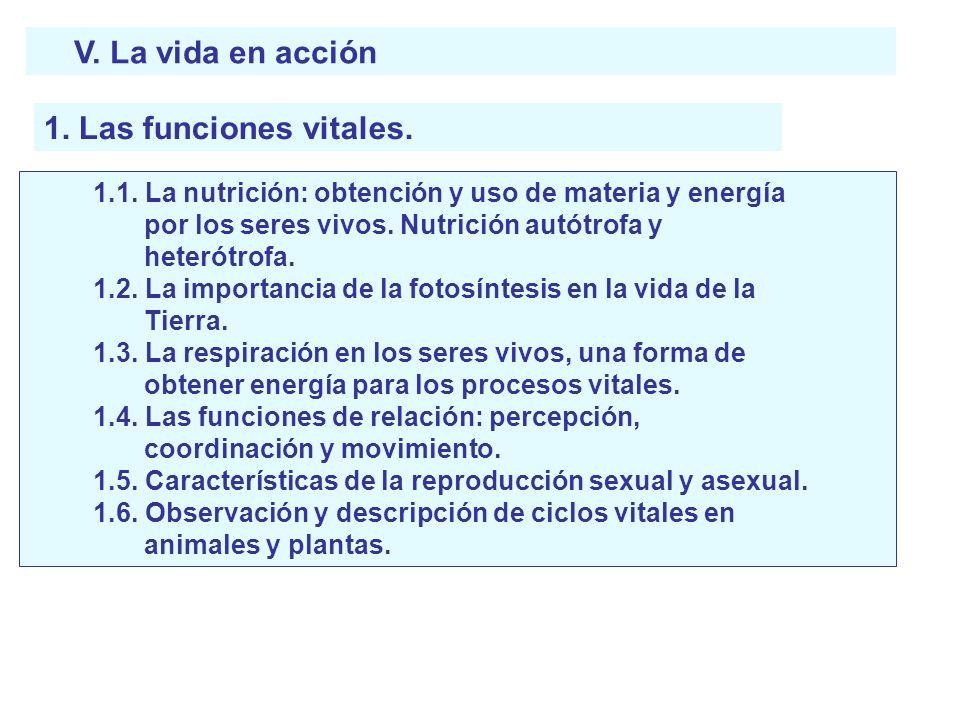V. La vida en acción 1. Las funciones vitales. 1.1. La nutrición: obtención y uso de materia y energía por los seres vivos. Nutrición autótrofa y hete