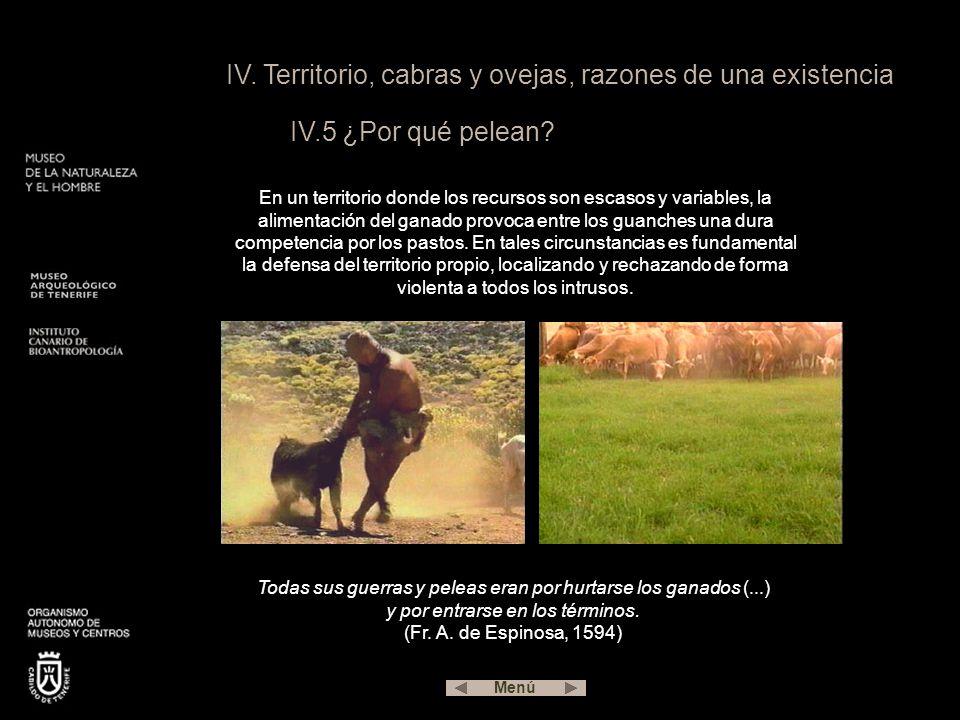 IV.Territorio, cabras y ovejas, razones de una existencia IV.5 ¿Por qué pelean.