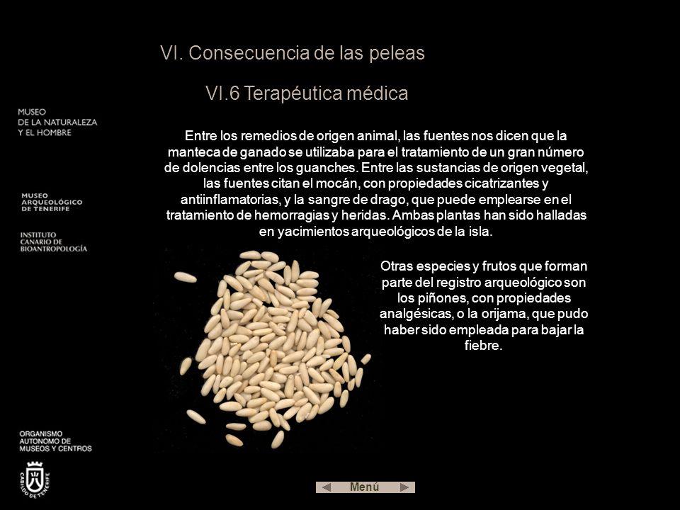 VI. Consecuencia de las peleas VI.6 Terapéutica médica Entre los remedios de origen animal, las fuentes nos dicen que la manteca de ganado se utilizab