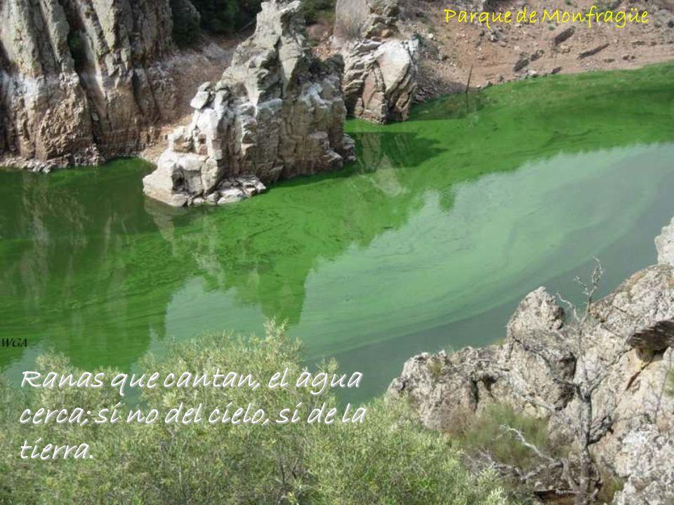 Agua que no has de beber… déjala correr. Rio Cofiñal - León