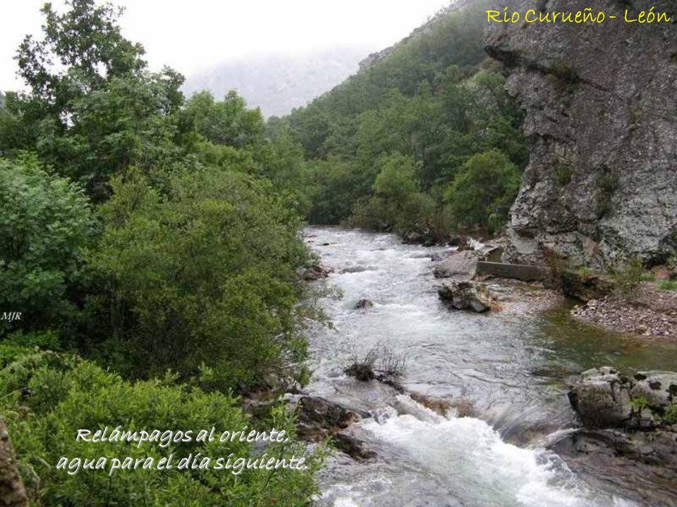 Ranas que cantan, el agua cerca; si no del cielo, si de la tierra. Parque de Monfragüe