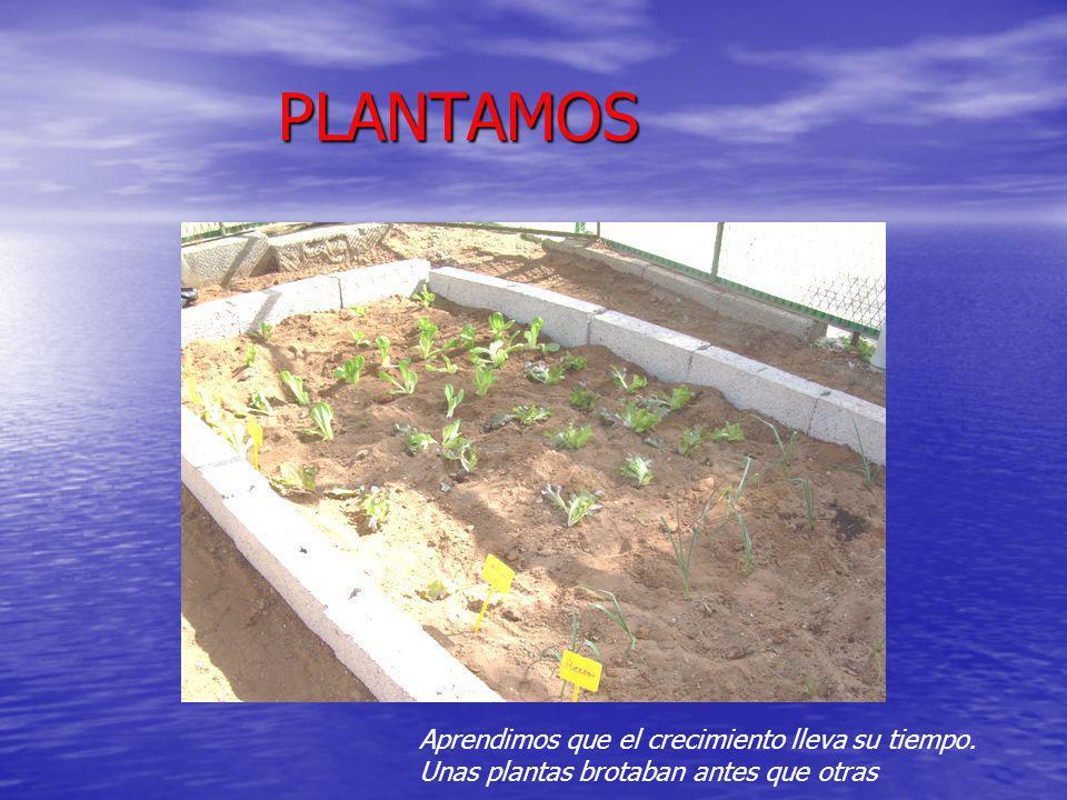 PLANTAMOS Aprendimos que el crecimiento lleva su tiempo. Unas plantas brotaban antes que otras