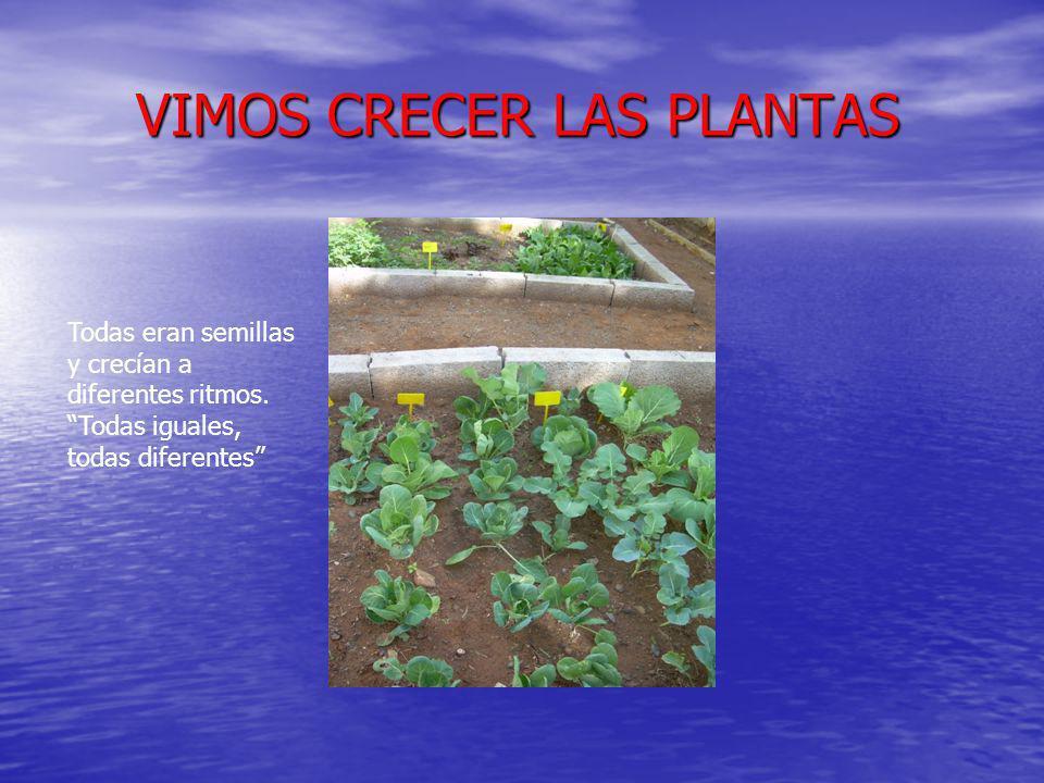 VIMOS CRECER LAS PLANTAS VIMOS CRECER LAS PLANTAS Todas eran semillas y crecían a diferentes ritmos.