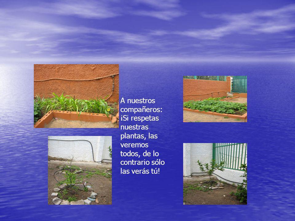 A nuestros compañeros: ¡Si respetas nuestras plantas, las veremos todos, de lo contrario sólo las verás tú!