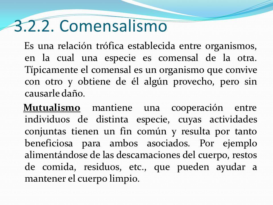 3.2.2. Comensalismo Es una relación trófica establecida entre organismos, en la cual una especie es comensal de la otra. Típicamente el comensal es un