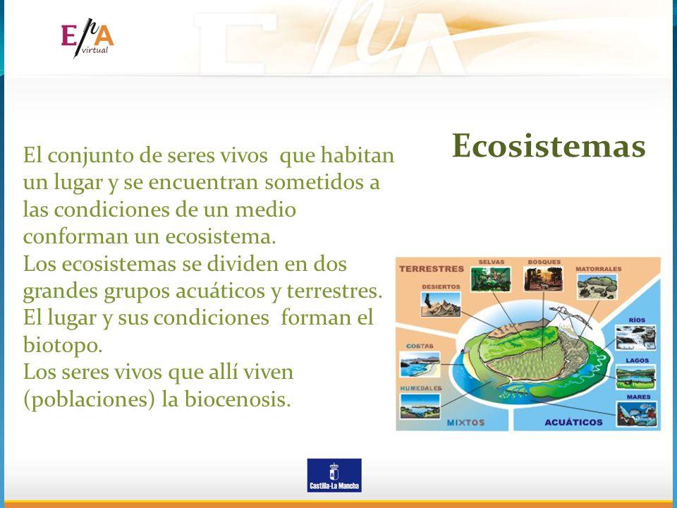 El conjunto de seres vivos que habitan un lugar y se encuentran sometidos a las condiciones de un medio conforman un ecosistema. Los ecosistemas se di