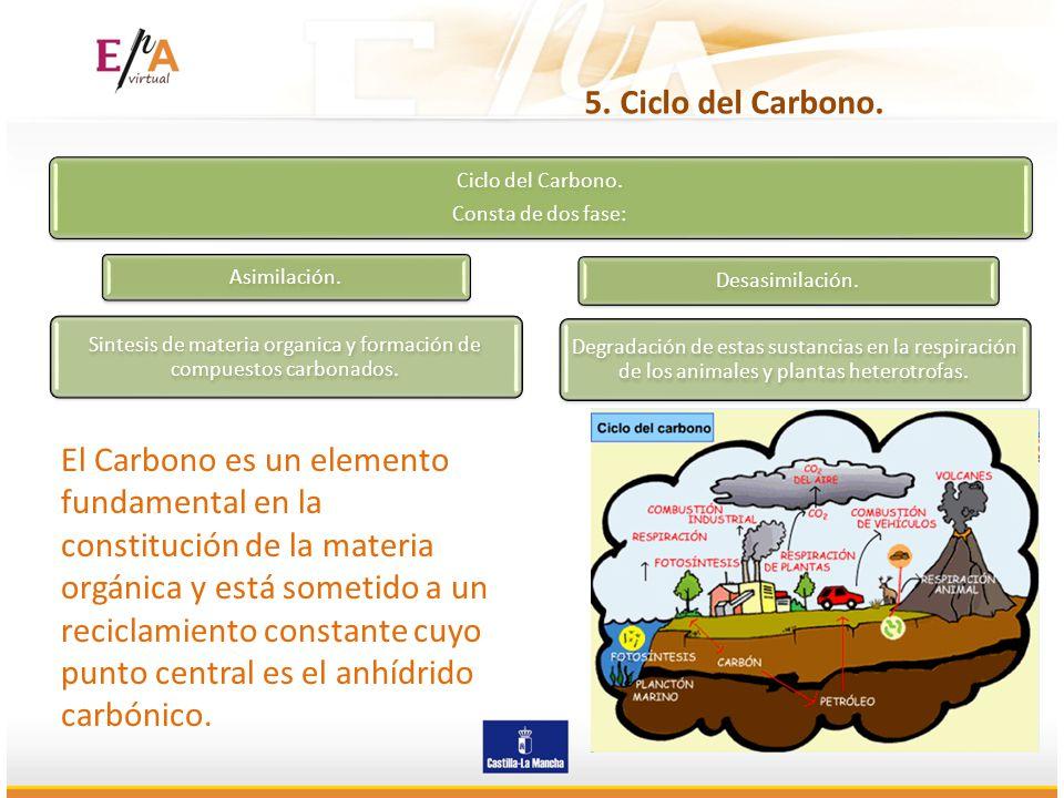 5. Ciclo del Carbono. Ciclo del Carbono. Consta de dos fase: Asimilación. Sintesis de materia organica y formación de compuestos carbonados. Desasimil