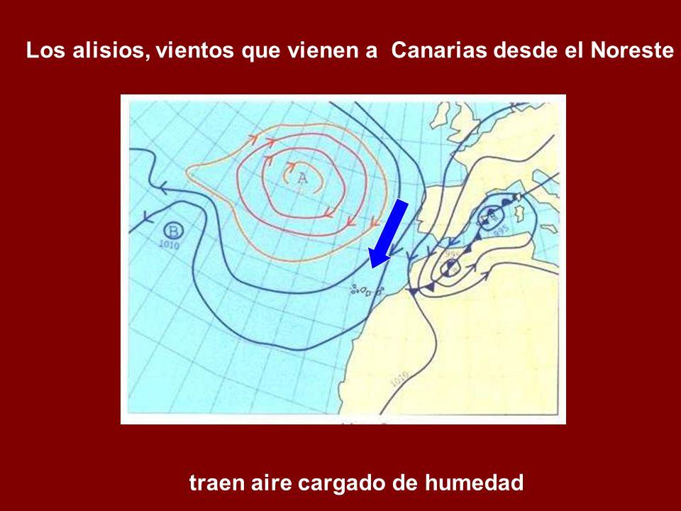 Los alisios, vientos que vienen a Canarias desde el Noreste traen aire cargado de humedad