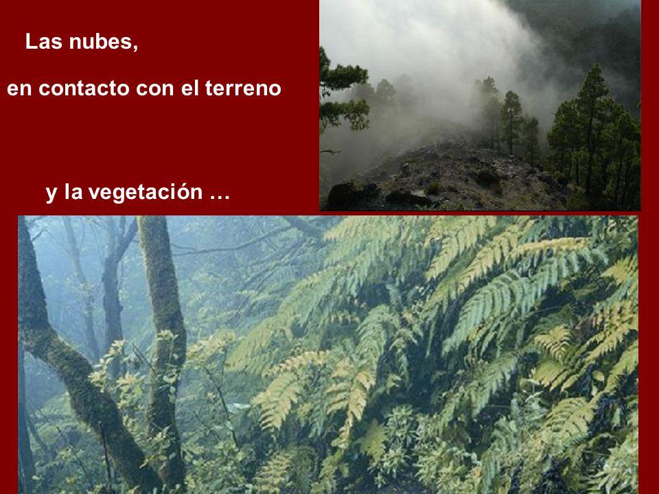 en contacto con el terreno y la vegetación … Las nubes,