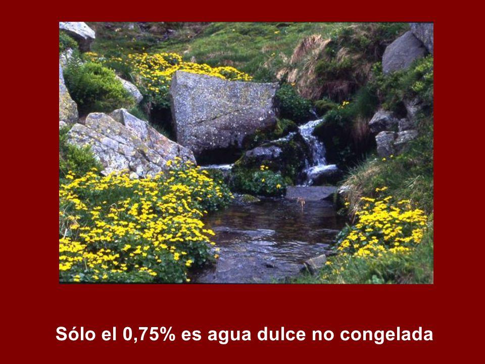 Sólo el 0,75% es agua dulce no congelada