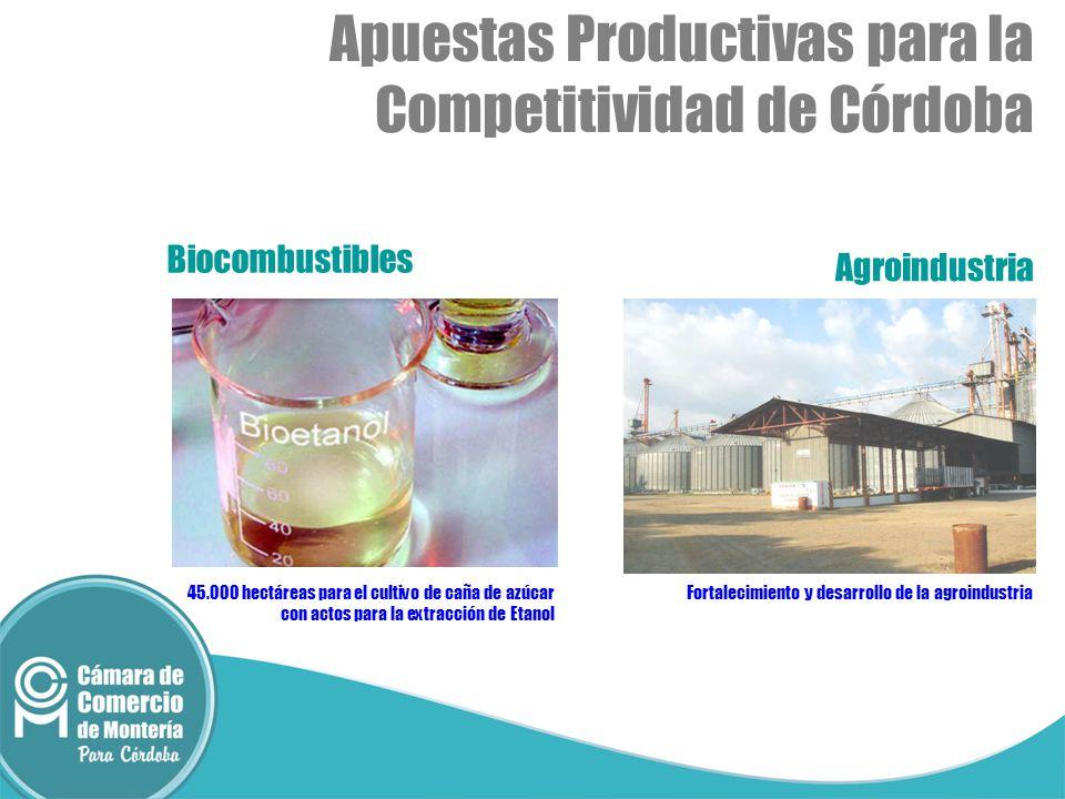 Biocombustibles Agroindustria 45.000 hectáreas para el cultivo de caña de azúcar con actos para la extracción de Etanol Fortalecimiento y desarrollo de la agroindustria Apuestas Productivas para la Competitividad de Córdoba