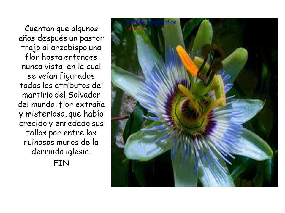 3707818592_d64956c0bf.jpg flickr.com Cuentan que algunos años después un pastor trajo al arzobispo una flor hasta entonces nunca vista, en la cual se