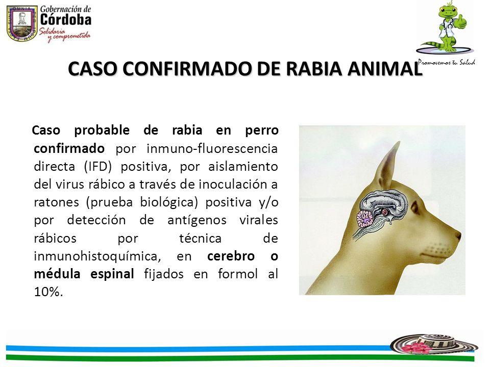 Promovemos tu Salud Caso probable de rabia en perro confirmado por inmuno-fluorescencia directa (IFD) positiva, por aislamiento del virus rábico a través de inoculación a ratones (prueba biológica) positiva y/o por detección de antígenos virales rábicos por técnica de inmunohistoquímica, en cerebro o médula espinal fijados en formol al 10%.
