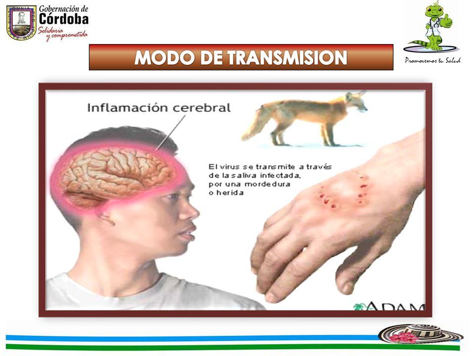 TRANSMISIBILIDAD CEREBROCEREBRO SALIVA INFECTADA HER IDA TEJIDOS ADYACENTES MEDULA ESPINAL