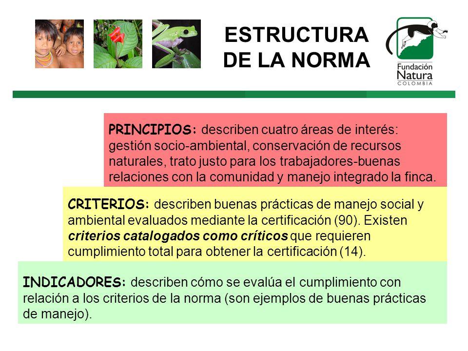 ESTRUCTURA DE LA NORMA PRINCIPIOS: describen cuatro áreas de interés: gestión socio-ambiental, conservación de recursos naturales, trato justo para los trabajadores-buenas relaciones con la comunidad y manejo integrado la finca.
