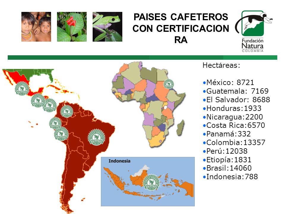 Hect á reas: México: 8721 Guatemala: 7169 El Salvador: 8688 Honduras:1933 Nicaragua:2200 Costa Rica:6570 Panamá:332 Colombia:13357 Perú:12038 Etiopía:1831 Brasil:14060 Indonesia:788 PAISES CAFETEROS CON CERTIFICACION RA