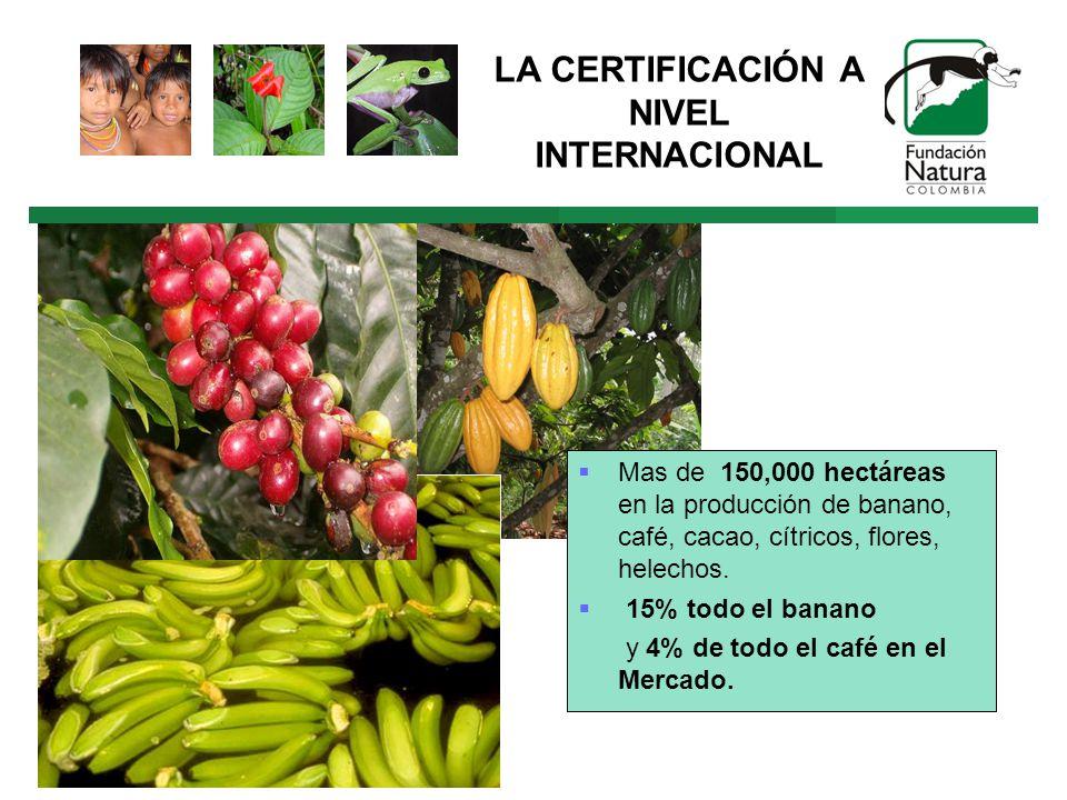 LA CERTIFICACIÓN A NIVEL INTERNACIONAL Mas de 150,000 hectáreas en la producción de banano, café, cacao, cítricos, flores, helechos.