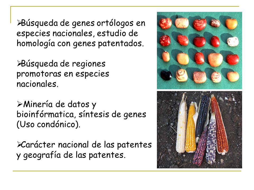 Búsqueda de genes ortólogos en especies nacionales, estudio de homología con genes patentados. Búsqueda de regiones promotoras en especies nacionales.