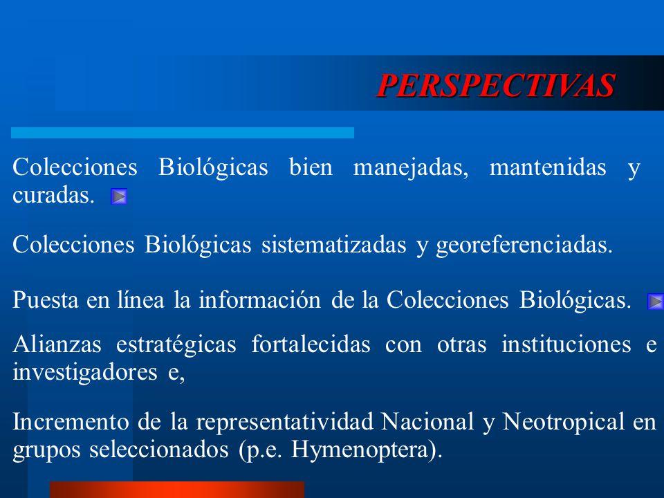 Colecciones Biológicas bien manejadas, mantenidas y curadas. PERSPECTIVAS Colecciones Biológicas sistematizadas y georeferenciadas. Alianzas estratégi