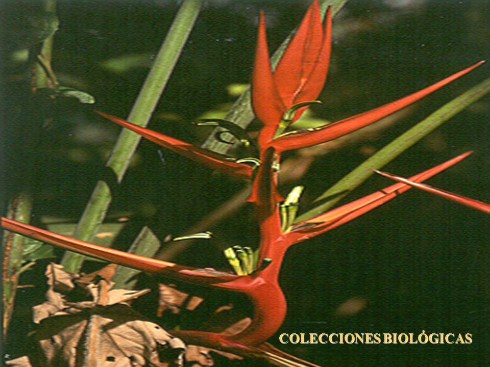 COLECCIONES BIOLÓGICAS