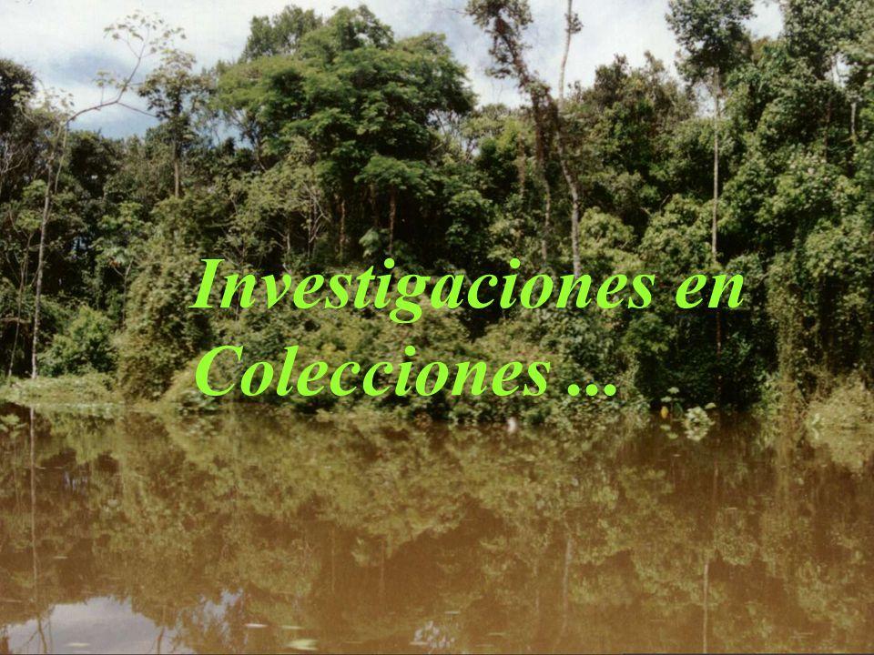 Investigaciones en Colecciones...