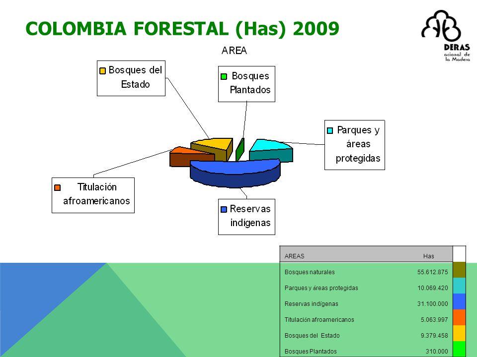 Bosque Plantado - AMERICA LATINA 2008