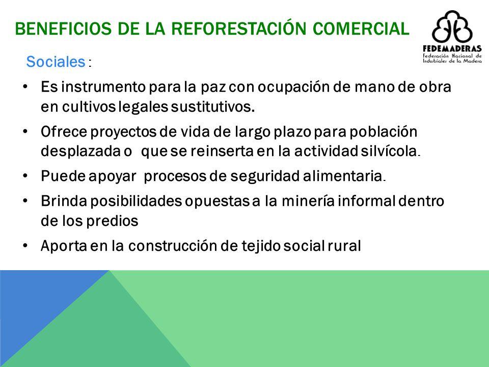 BENEFICIOS DE LA REFORESTACIÓN COMERCIAL Ambientales : Aporta soluciones a los problemas de cambio climático, permite la captura de CO2. Contribuye a