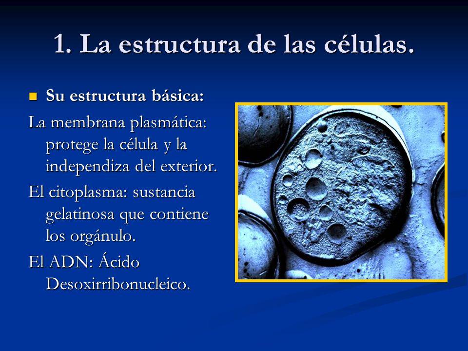 1. La estructura de las células. Su estructura básica: Su estructura básica: La membrana plasmática: protege la célula y la independiza del exterior.