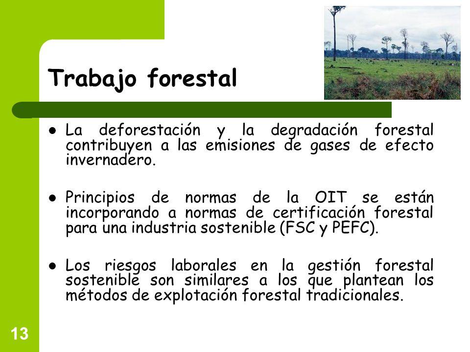 13 Trabajo forestal La deforestación y la degradación forestal contribuyen a las emisiones de gases de efecto invernadero. Principios de normas de la