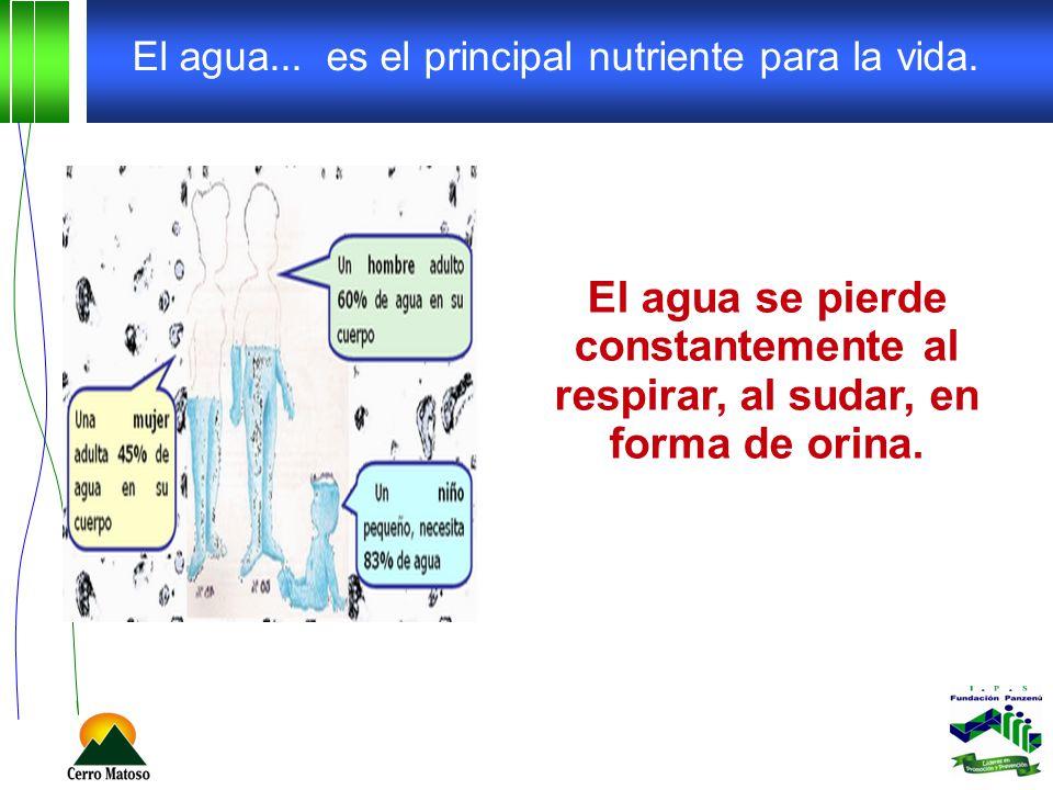 El agua... es el principal nutriente para la vida. El agua se pierde constantemente al respirar, al sudar, en forma de orina.