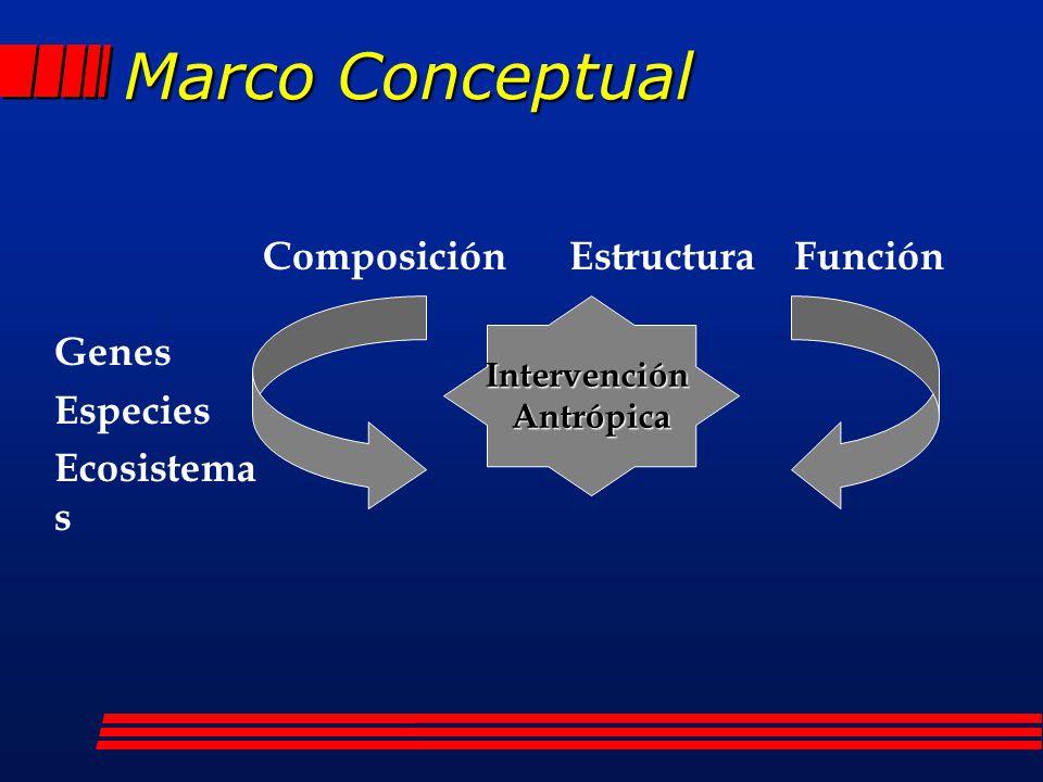 Marco Conceptual IntervenciónAntrópica Genes Especies Ecosistema s Composición Estructura Función
