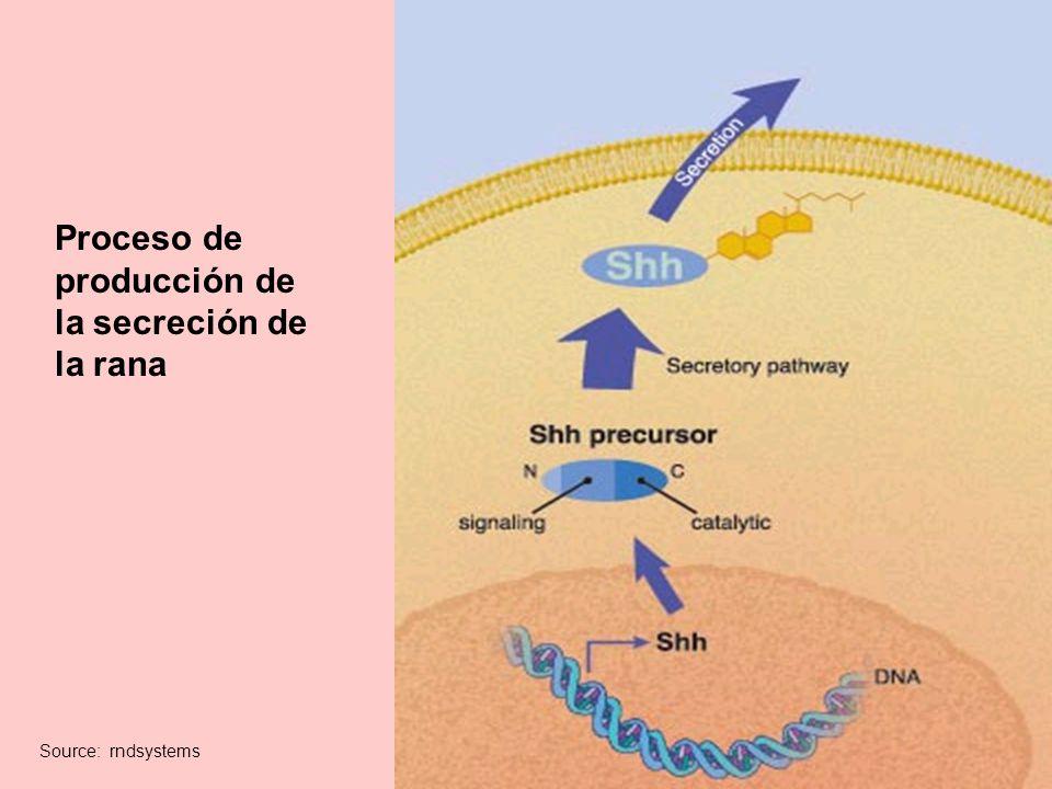 Proceso de producción de la secreción de la rana Source: rndsystems