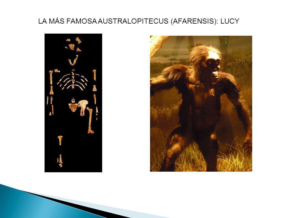 LA MÁS FAMOSA AUSTRALOPITECUS (AFARENSIS): LUCY