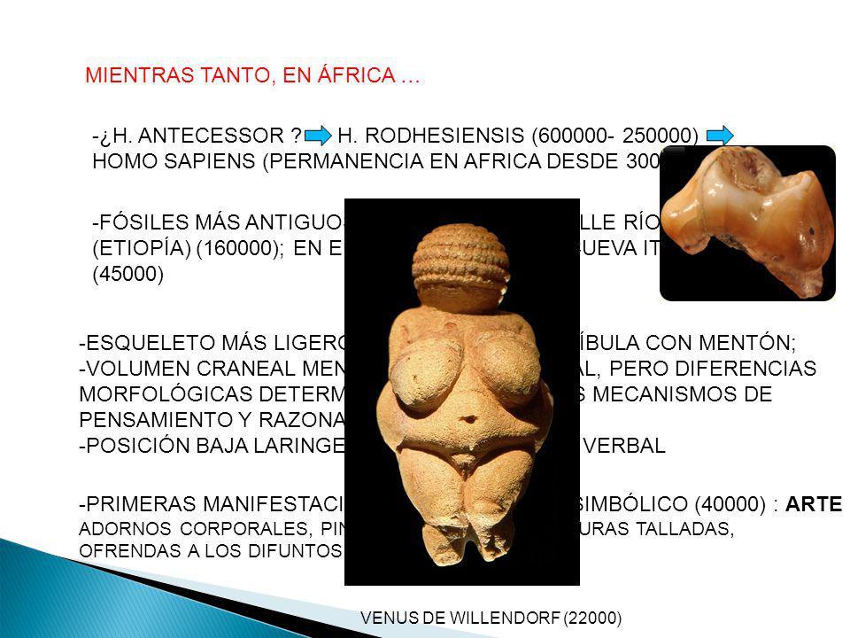 MIENTRAS TANTO, EN ÁFRICA … -¿H. ANTECESSOR ? H. RODHESIENSIS (600000- 250000) HOMO SAPIENS (PERMANENCIA EN AFRICA DESDE 300000-160000) -FÓSILES MÁS A